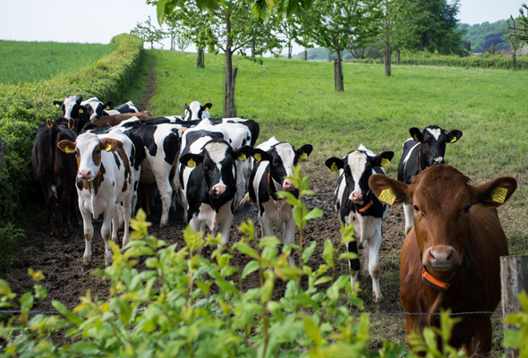 Agriculture & Livestock
